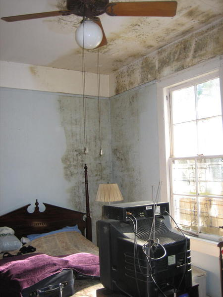 mold moisture damage leads to long lasting respiratory effects study
