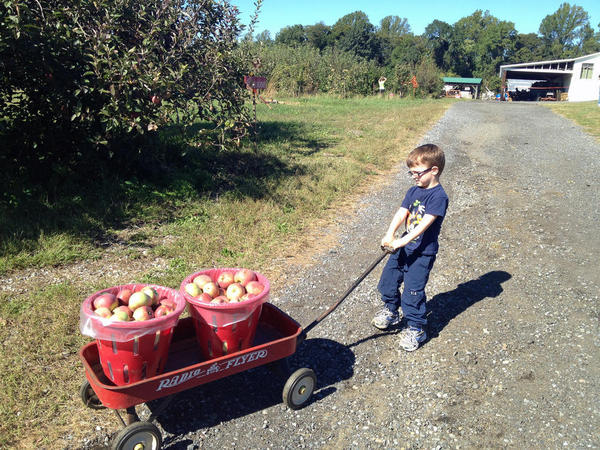 Hauling Our Apples in the Wagon