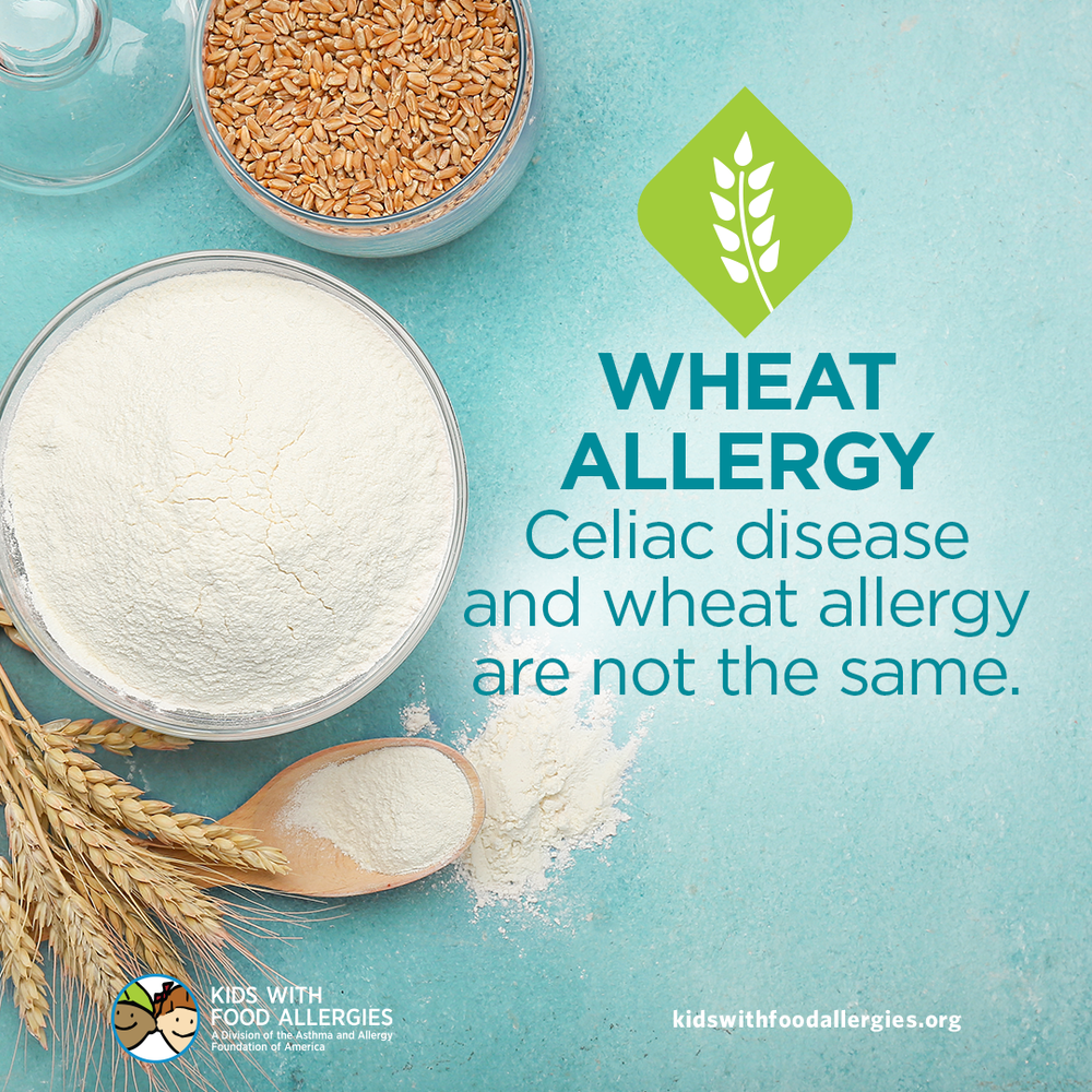 Food Allergy Education: Wheat Allergy is Different From Celiac