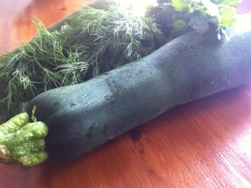 Fresh zucchini is in season now!